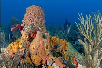 Multicolored sponges like these are a large component of the reefs of southeast Florida.